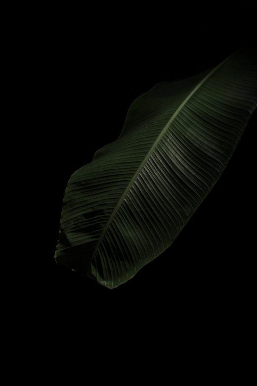 PLANTARIUM_04