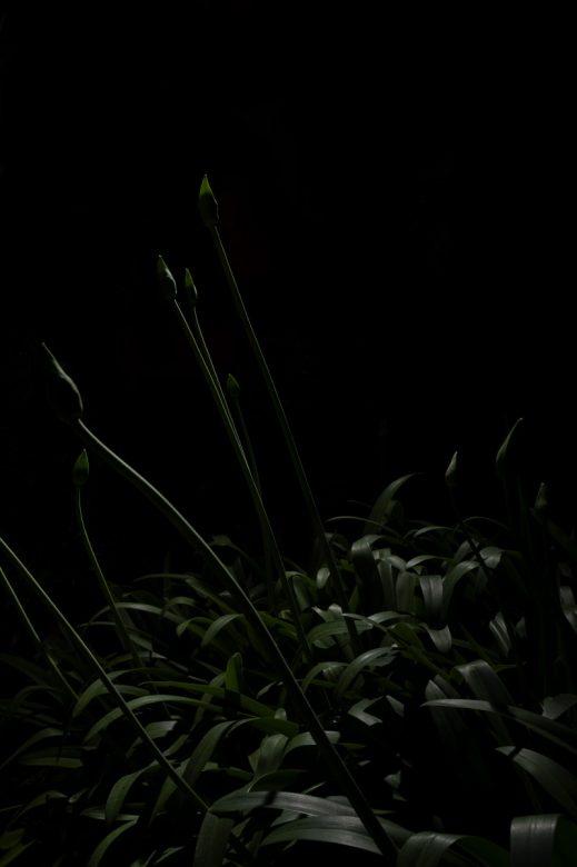PLANTARIUM_17