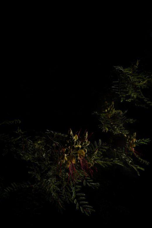 PLANTARIUM_19